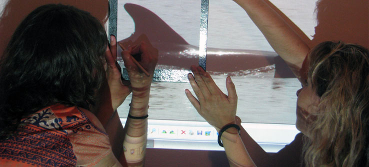 Researchers can identify individual dolphins using photos of their fins.